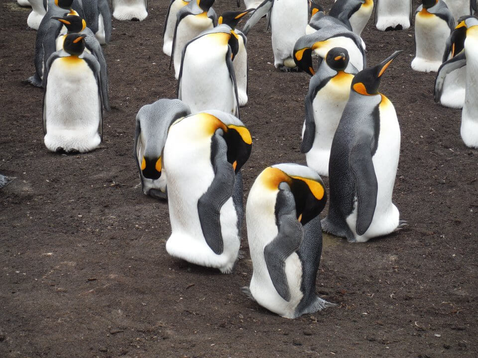 Walking with penguins | a dream come true