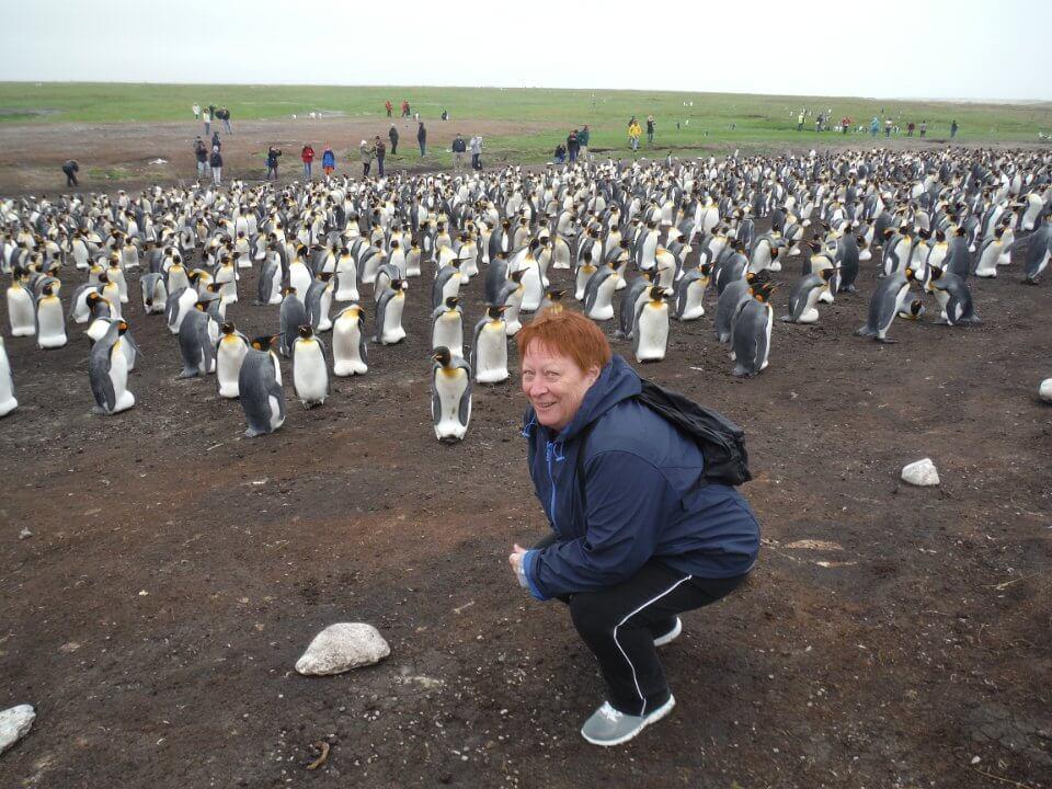 King penguins nursery